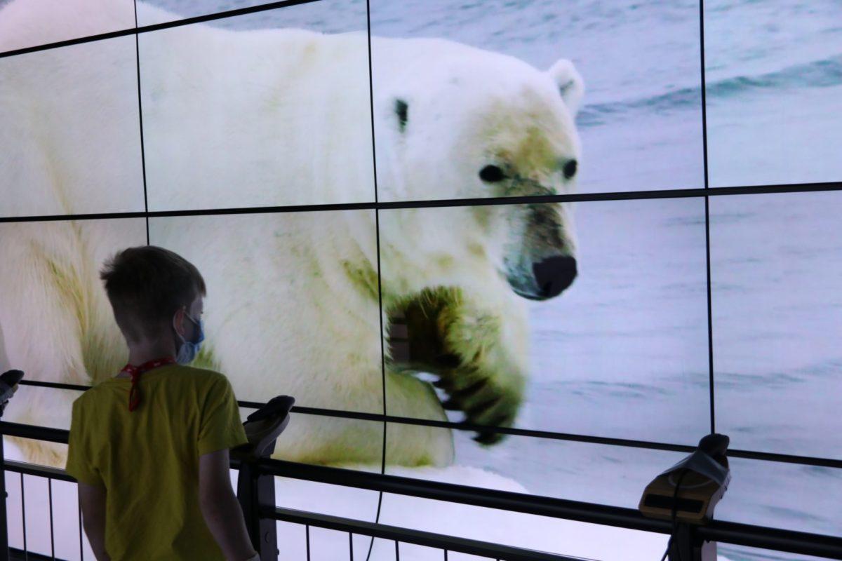 Ein Junge schaut auf einen Eisbären