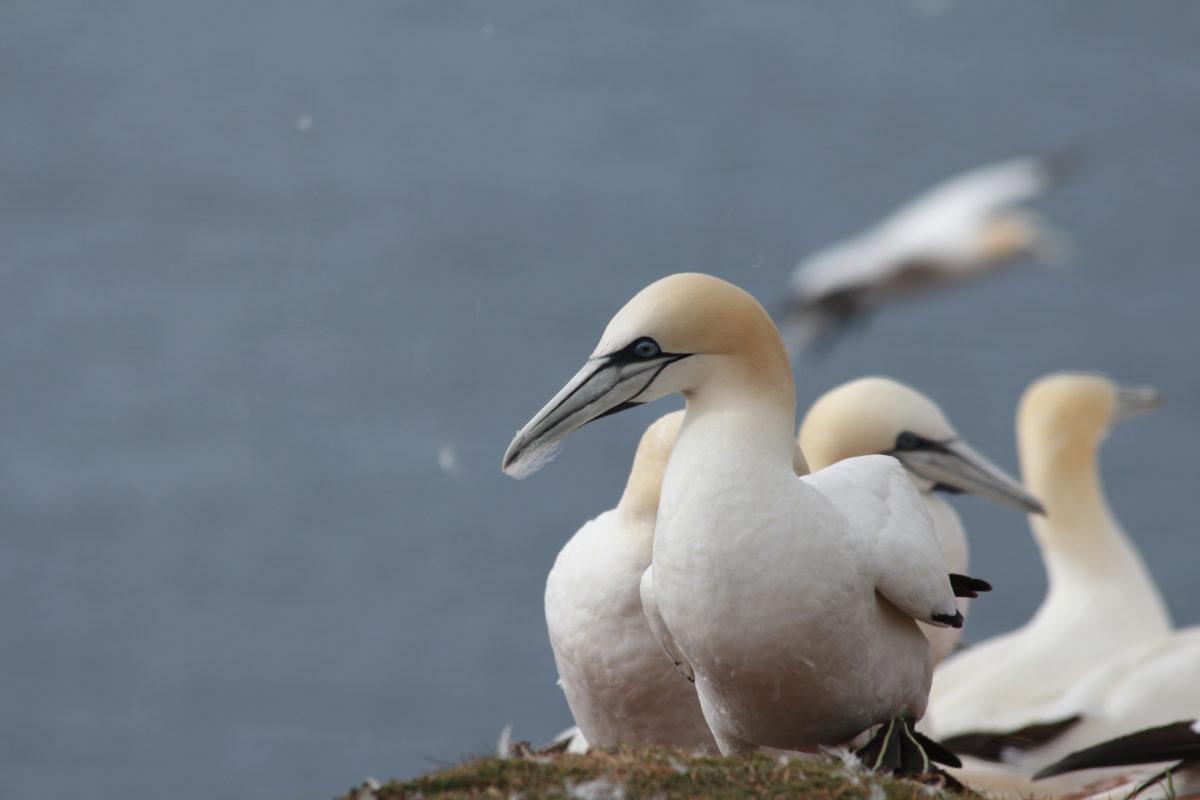 Seevögel auf dem Felsen
